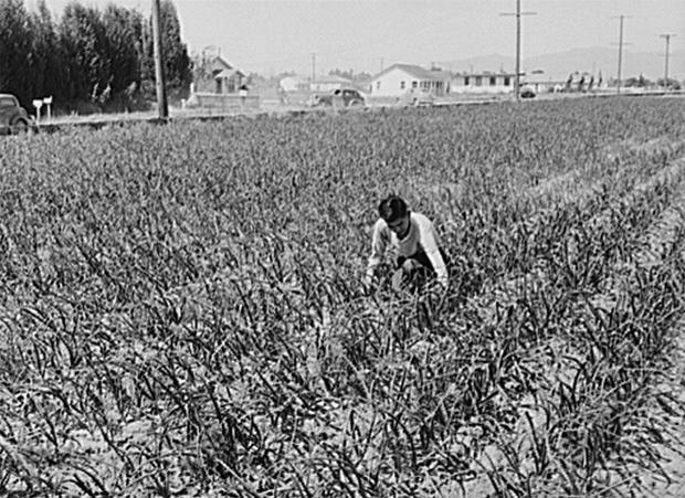 japanese-farmer-california-loc.jpg