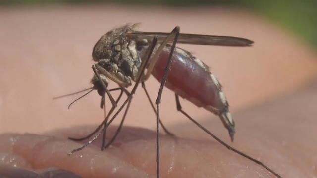 ctm0804-zika-mosquito.jpg