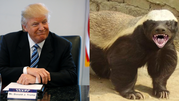 Image result for Steve Bannon--The Honey Badger