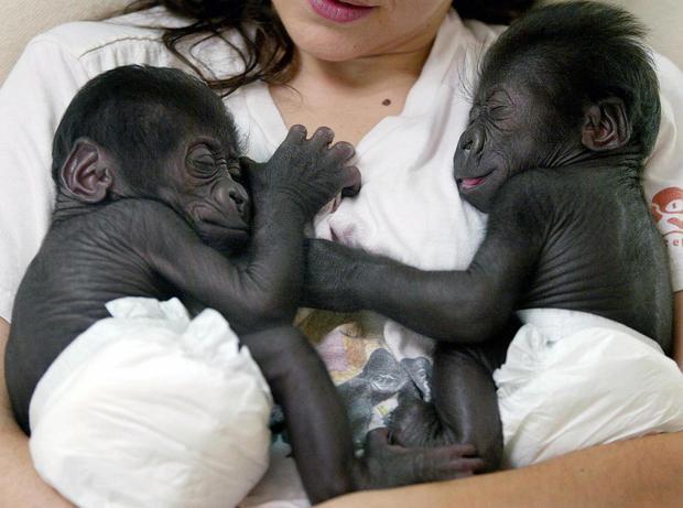Adorable animal twins