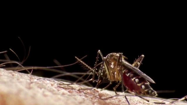 eve-zika-mosquitoes-0901-1116262-640x360.jpg