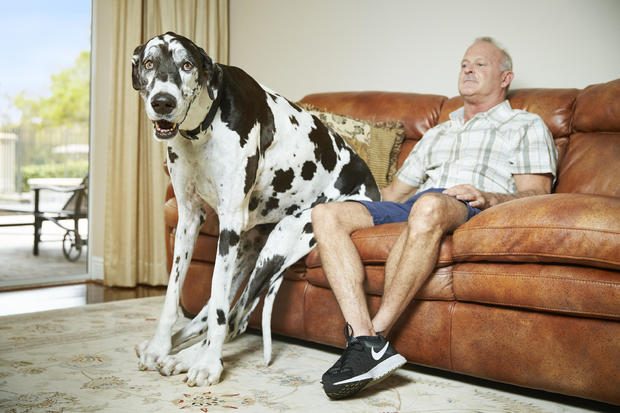 lizzy-tallest-female-dog-0076.jpg