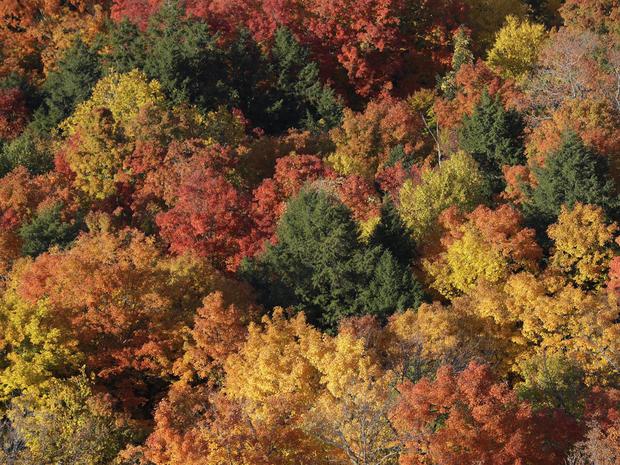 Fall foliage 2016