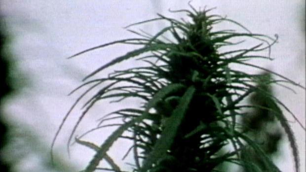 ot-marijuanarewindb.jpg