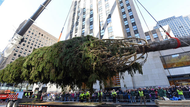 Rockefeller Center Christmas tree arrives in NYC - CBS News