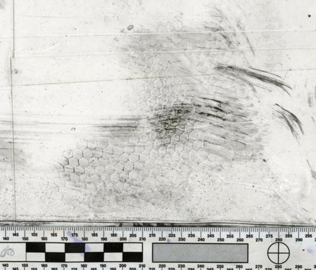 hunted-fingerprints.jpg