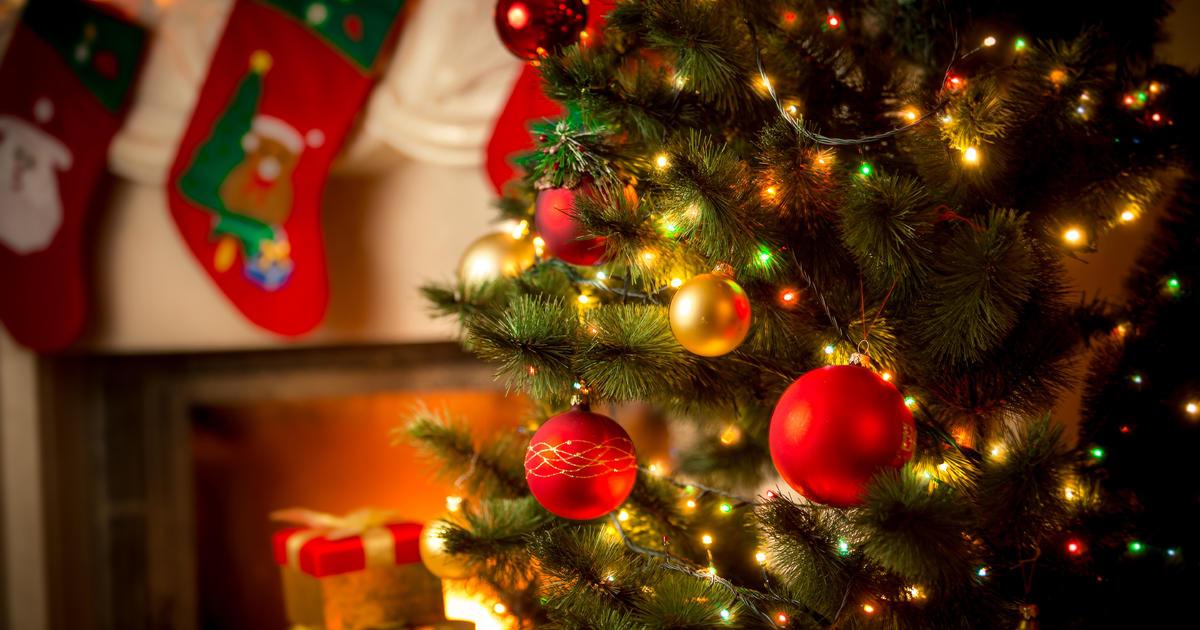 You Pick Christmas Trees
