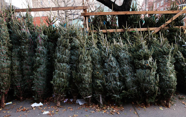 Christmas trees sit for sale on Manhattan's Sixth Avenue Dec. 11, 2009, in New York City.