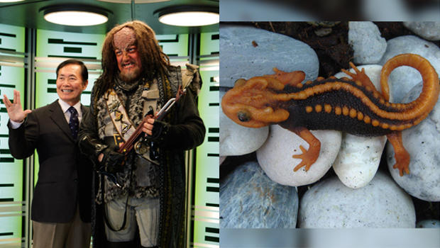 klingon-newt-split.jpg