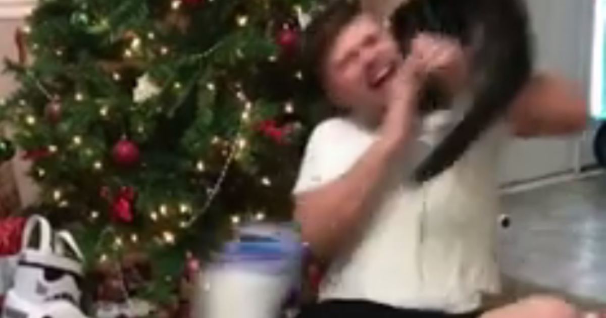 Video of cat attacking man opening Christmas present goes viral ...
