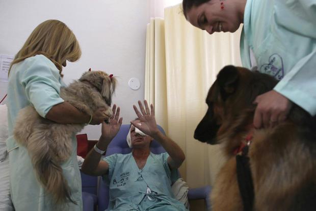 brazilian-therapy-dogs-6-2016-12-30.jpg