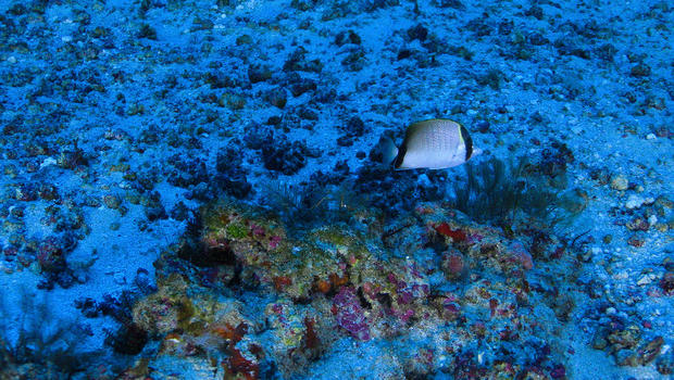Amazing Amazon Reef