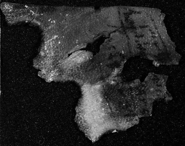new-dead-sea-scroll-3.jpg
