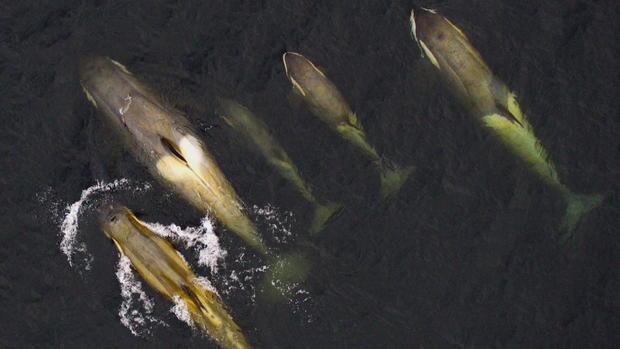 phillips-antarctica-killer-whales-frame-2869.jpg