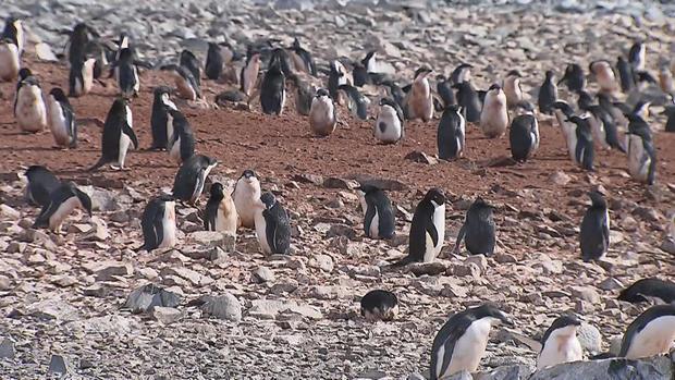 phillips-climate-penguins-0215en-transfer.jpg