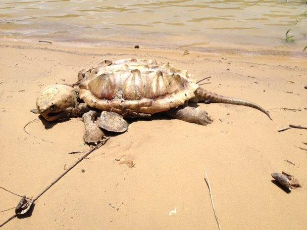 #bestcarcass dead animal photos you cannot unsee (GRAPHIC IMAGES)
