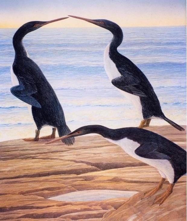waimanu-penguin.jpg