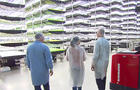 vertical-farming-aerofarms-c-promo.jpg