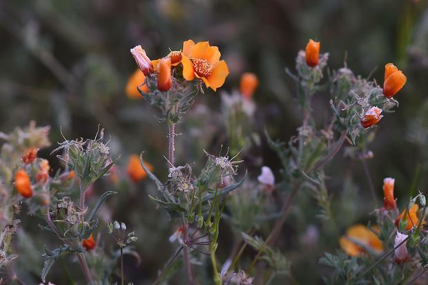 Super bloom: Spectacular spring flowers of 2017