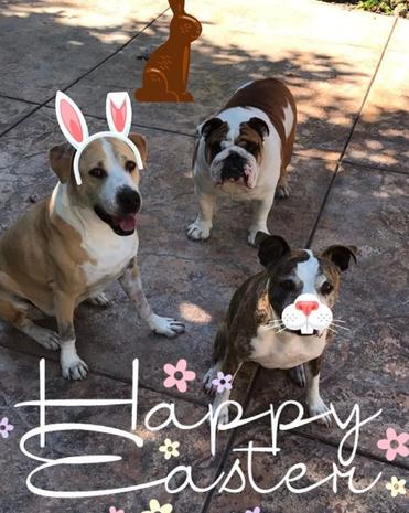 Stars celebrate Easter 2017