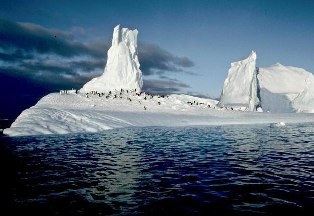img0008-penguins-on-ice-paradise-bay.jpg