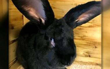 Owner says 3-foot rabbit died while on United flight