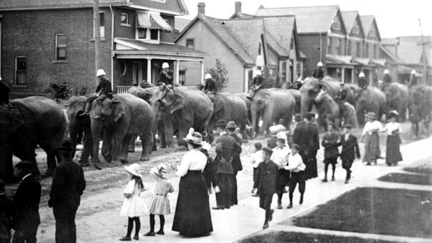 circus-world-elephant-parade-620.jpg