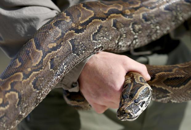 Snakes On The Prowl Insane Snake Attacks Warning