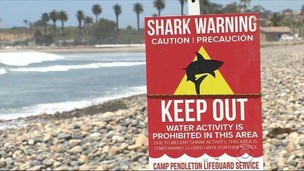evans-shark-attacks-calif-3-2017-5-6.jpg