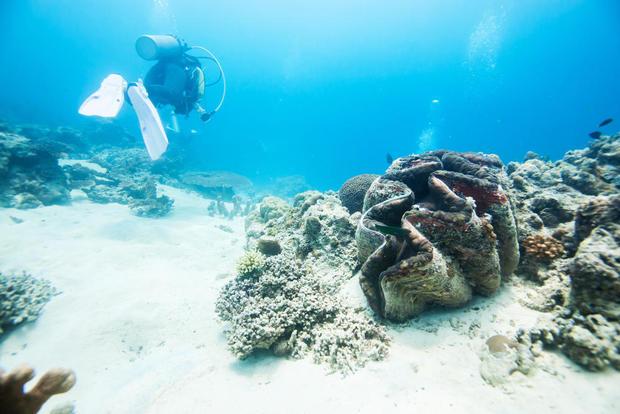 giant-clam-shutterstock.jpg