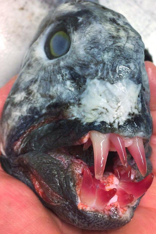 catfish-beautiful.jpg
