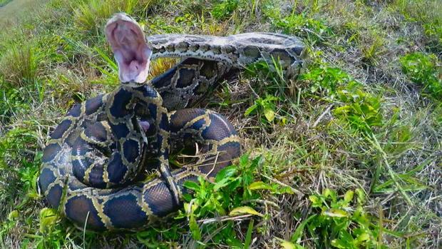 Resultado de imagen de snake python