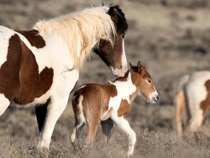 Nature up close: Domestic and wild horses