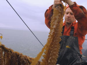 "Fisherman serving up ""culinary equivalent of the electric car"""
