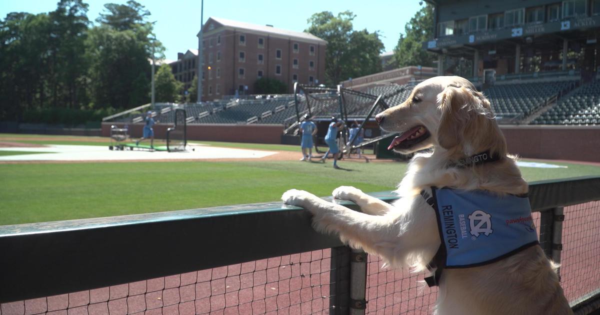 Unc Baseball Service Dog