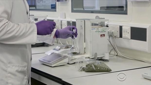 lapook-marijuana-seizures-4-2017-5-27.jpg