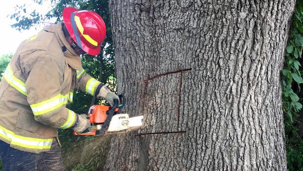 tree-picture.jpg