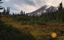 Nature: Mount Rainier