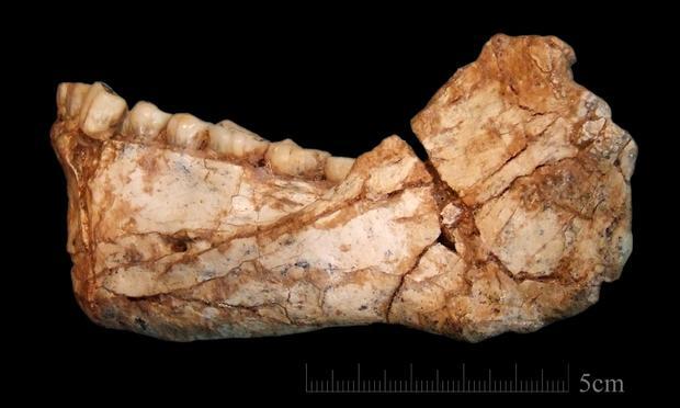 fossil-jaw.jpg