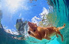 swimming-dog.jpg