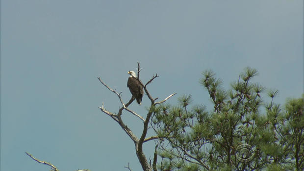 170703-en-reid-bald-eagles-04.jpg