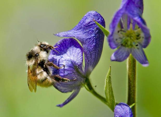 bee-with-flower-b-verne-lehmberg.jpg