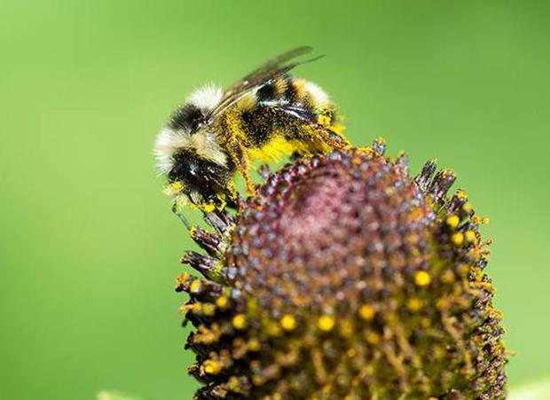 bee-with-flower-a-verne-lehmberg.jpg