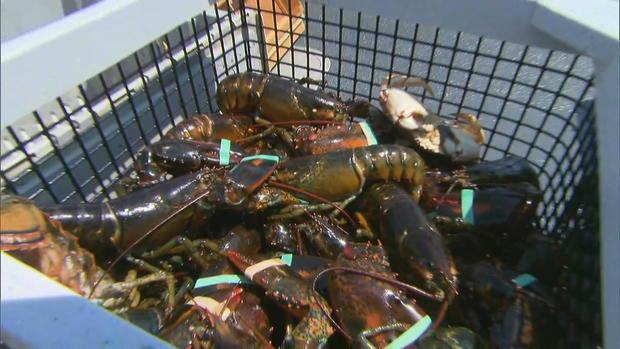 lobsters-in-box.jpg