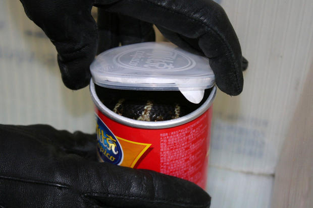 A king cobra snake is seen in a container of chips in this undated handout photo released on July 25, 2017.