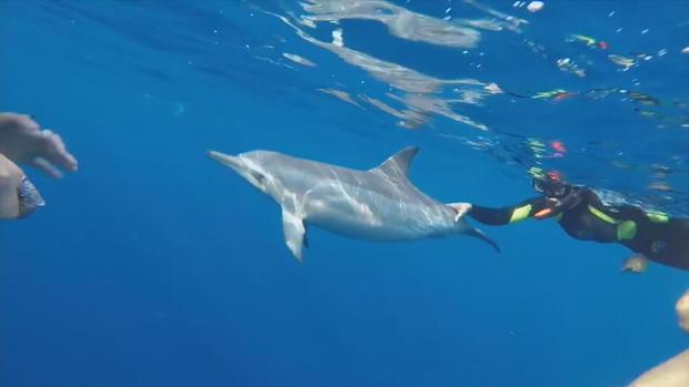ctm-0803-spinner-dolphin-hawaii-ban.jpg