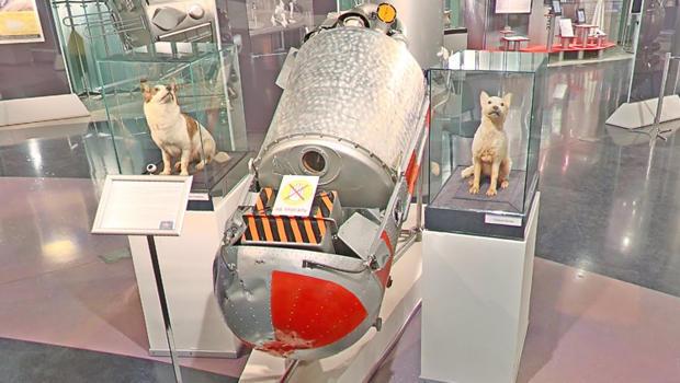belka-strelka-museum-of-cosmonautics-moscow-google-620.jpg