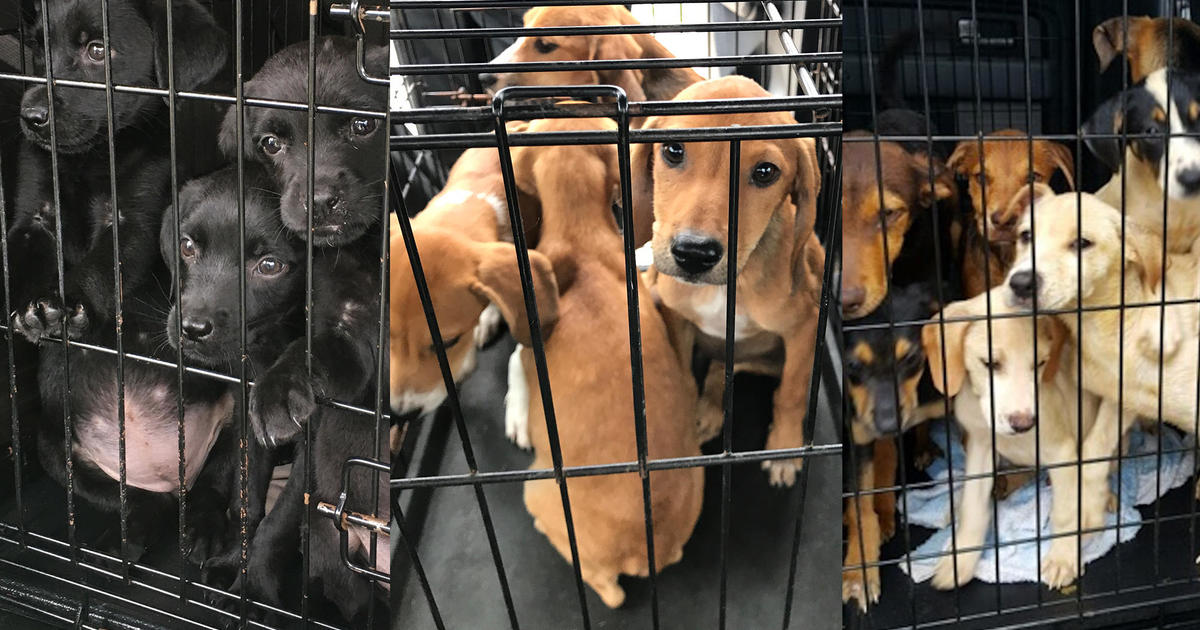Thousands Of Animals Expected To Flood Shelters After