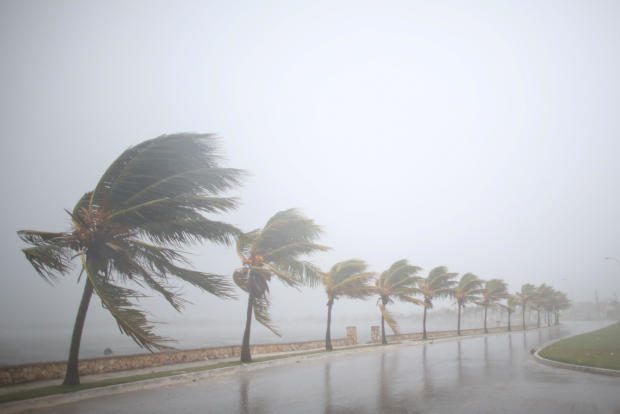 Palm trees sway in the wind prior to the arrival of the Hurricane Irma in Caibarien