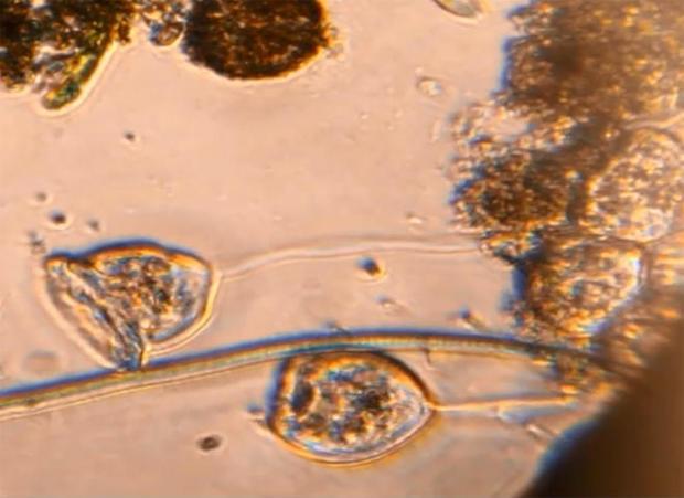 bacteria-lesley-robertson-delft-university-of-technology-promo.jpg